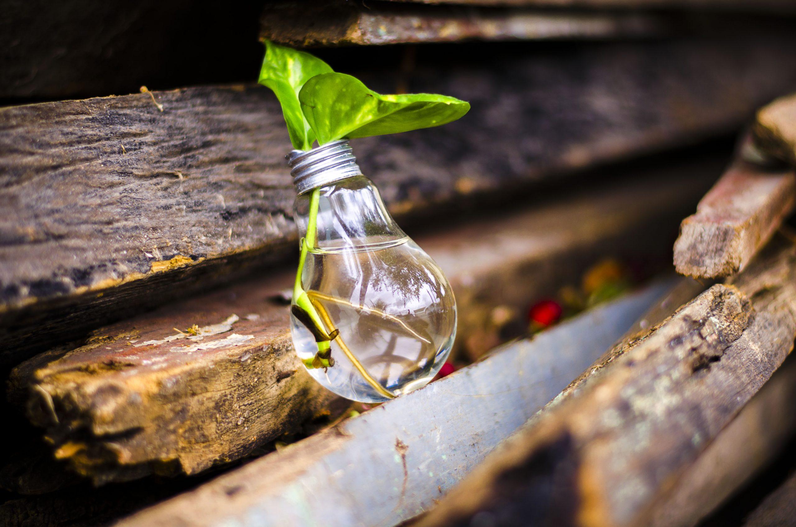 Autorizatie de mediu